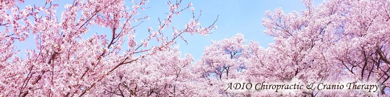 クレニオ 2017年4月・5月のお休み・臨時営業情報 -ADIO Straight Chiropractic & Craniosacral Therapy-